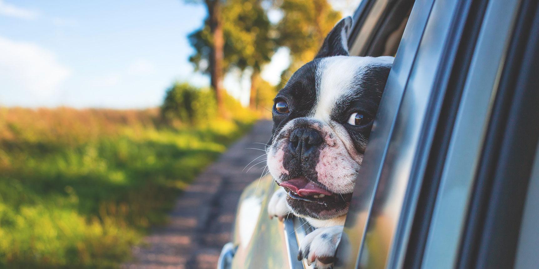 Brilliant Business Blogging: Veterinary